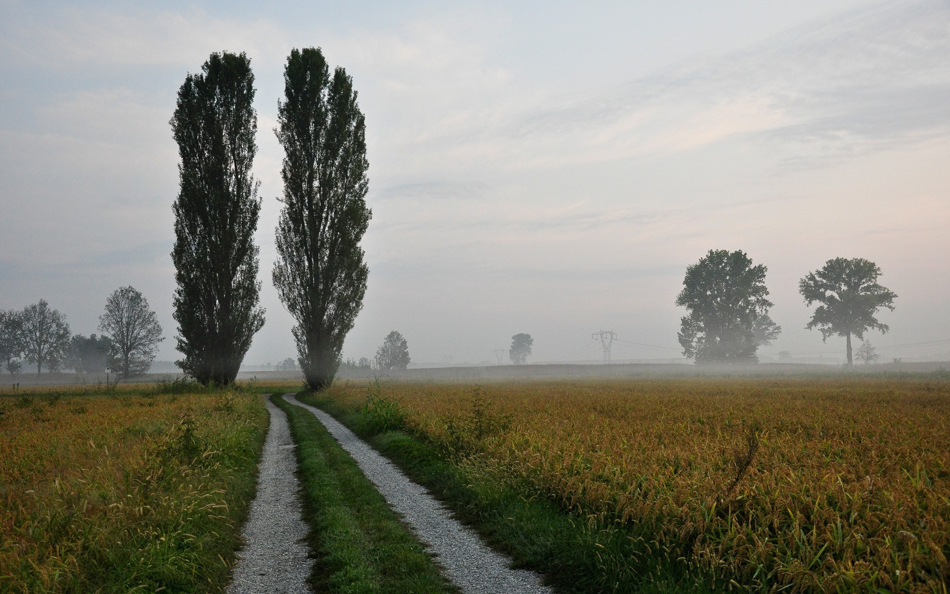 road landscape fog agriculture countryside tree dawn cropland field rural outdoors nature farm grass sky mist daylight fall sunset