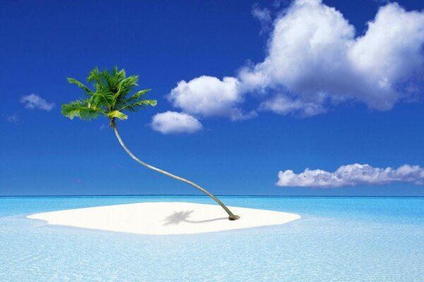 Lone palm tree on a small island in the middle of the ocean