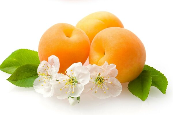 Three peach and white flowers