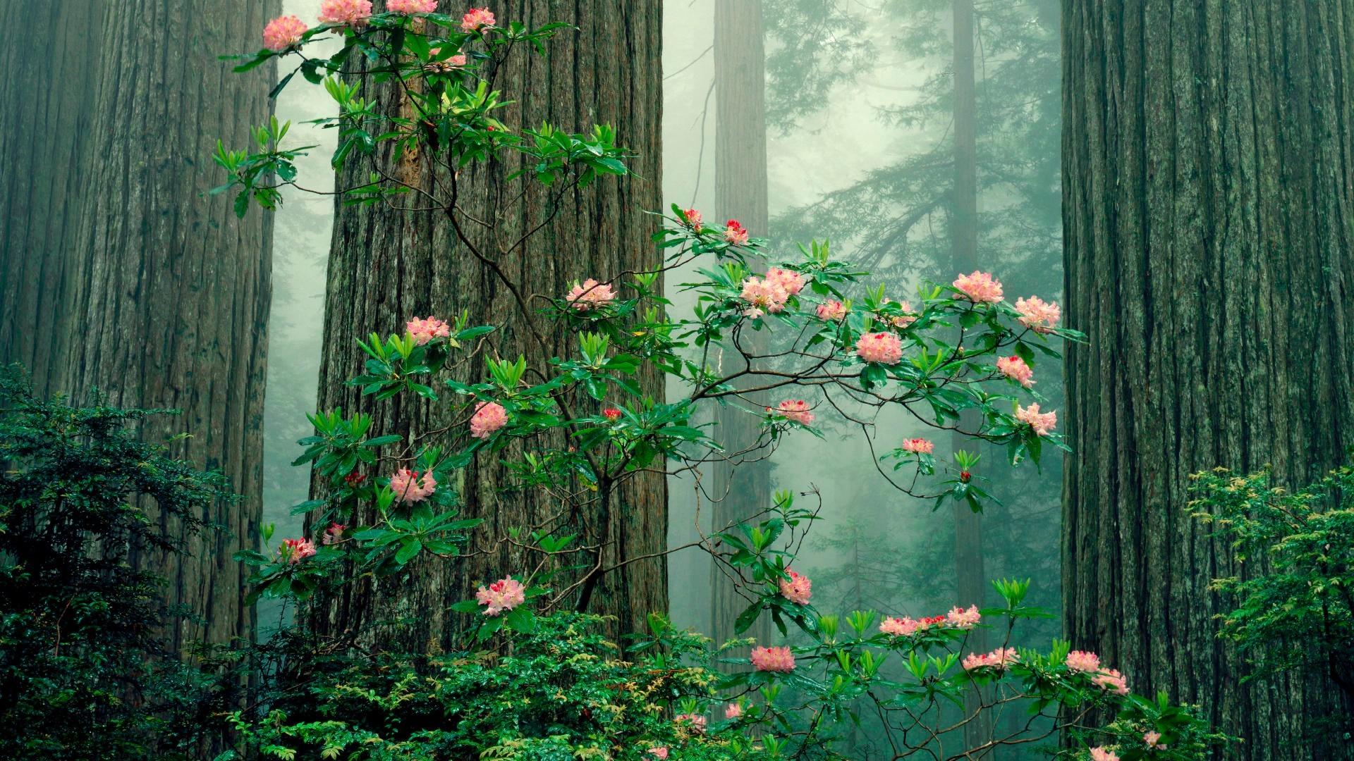 Розы куст забор  № 3015268 загрузить