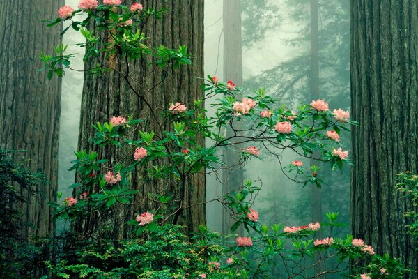 The Bush wild roses in the forest