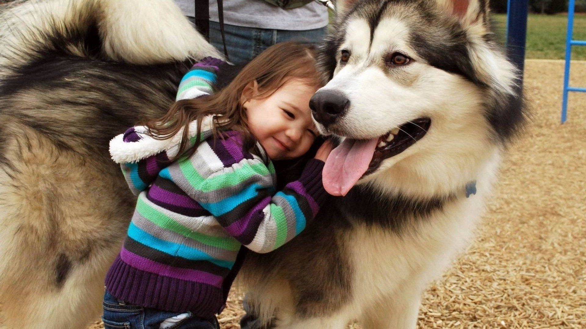 The girl pressed against his beloved husky dog