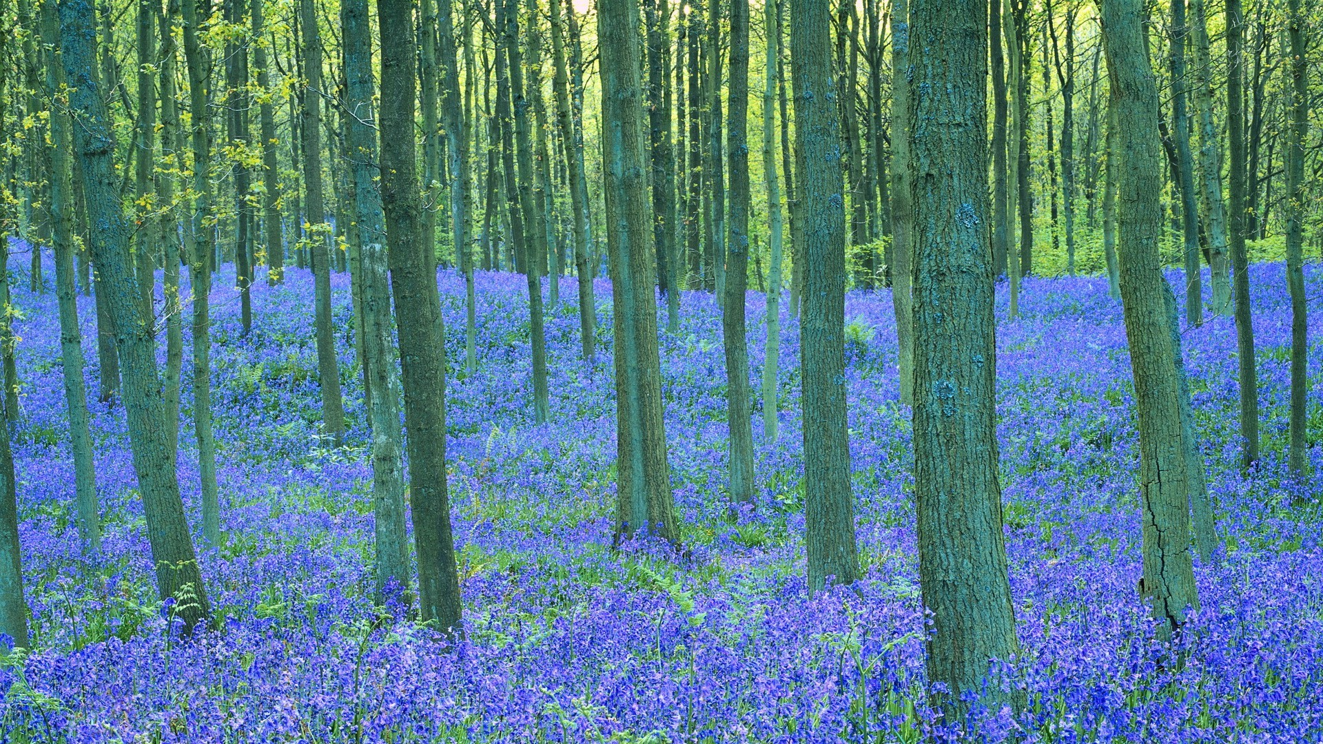 flowers wood landscape nature scenic flower leaf tree countryside scenery outdoors season flora park dawn beech idyllic rug growth rural