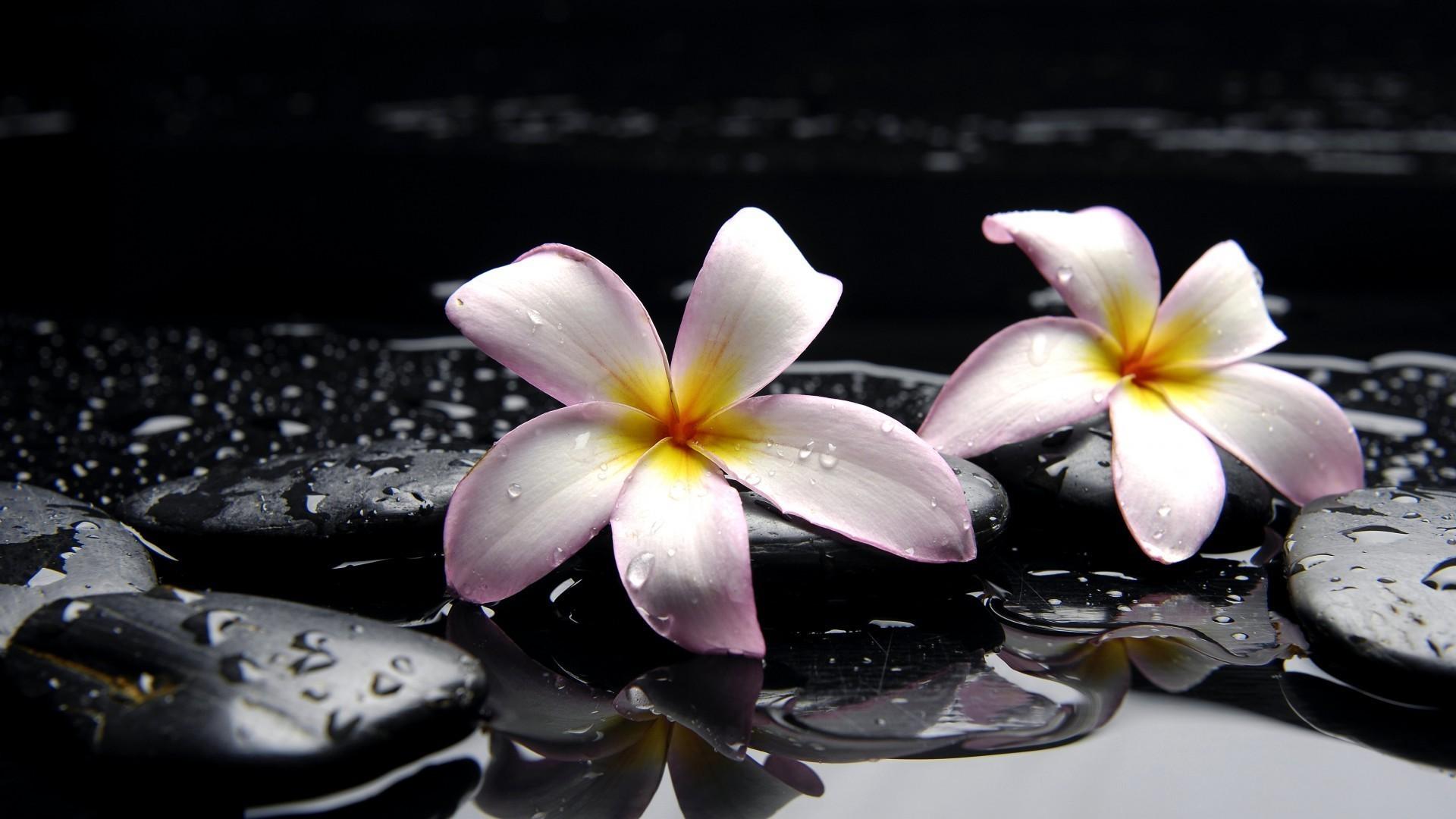 Орхидея камни вода растительность без регистрации