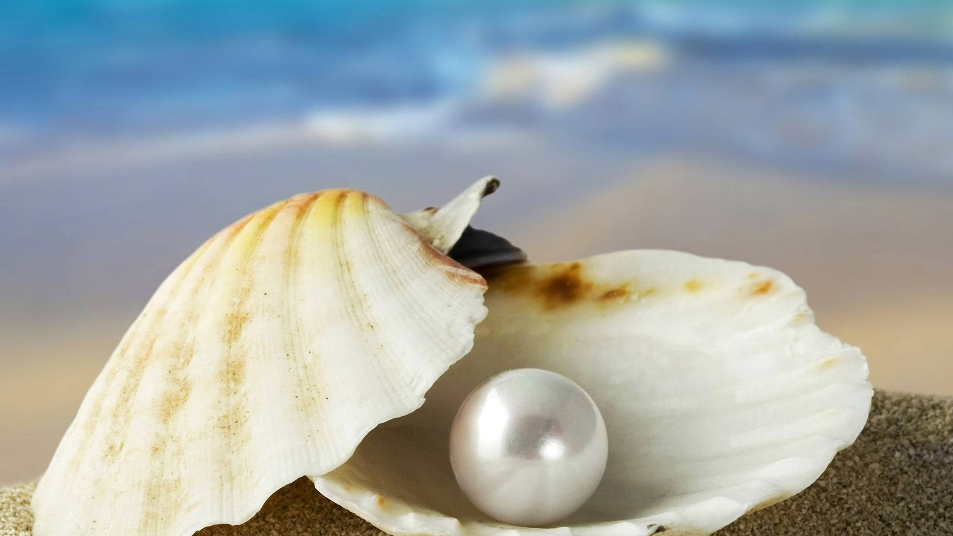 A pearl in the shell