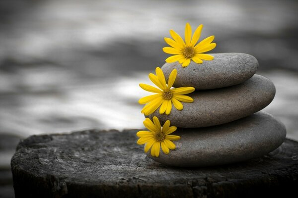 Yellow flowers on the stones