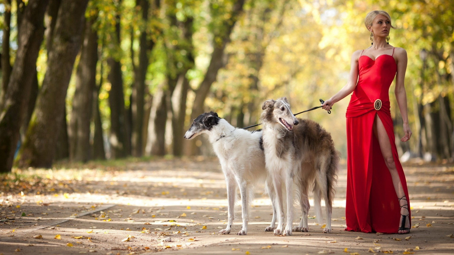 Russian Borzoi with a girl in a red