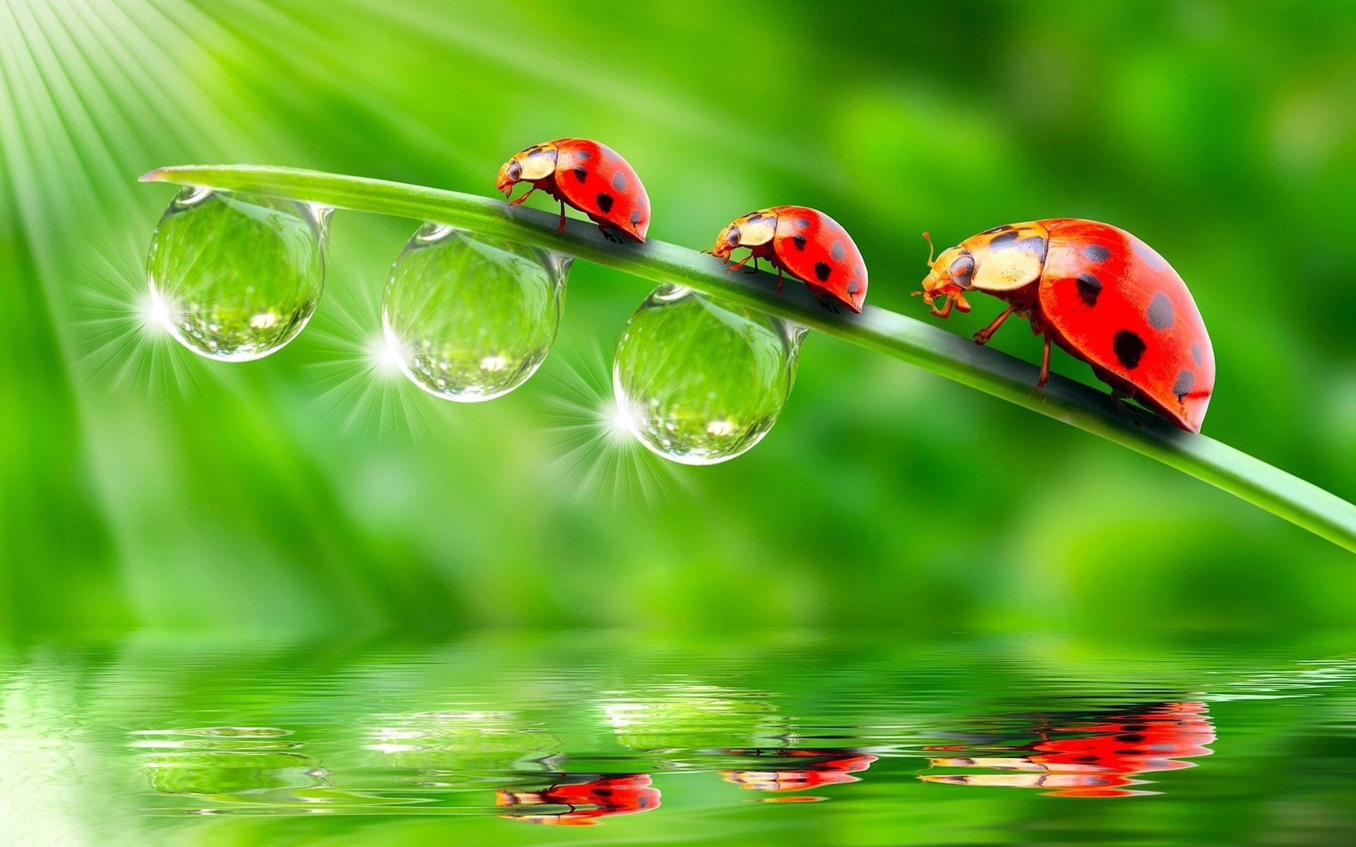 droplets and water ladybug rain blade grass dew flora drop leaf garden nature environmental beetle lawn insect summer purity environment biology hayfield growth