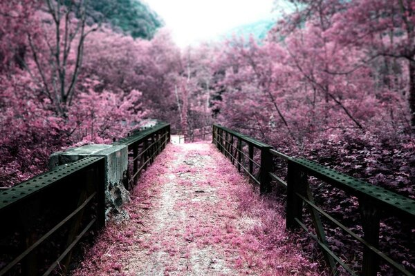 Garden,bridge,Sakura