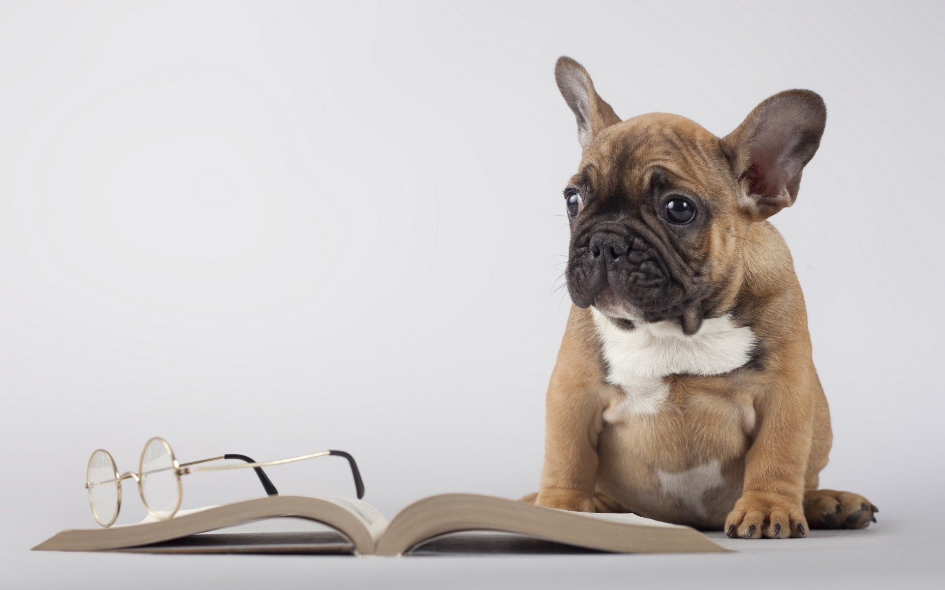 Pug took off his glasses, as tired of reading books