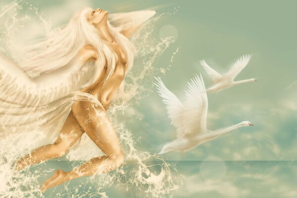 Swans,water,angel