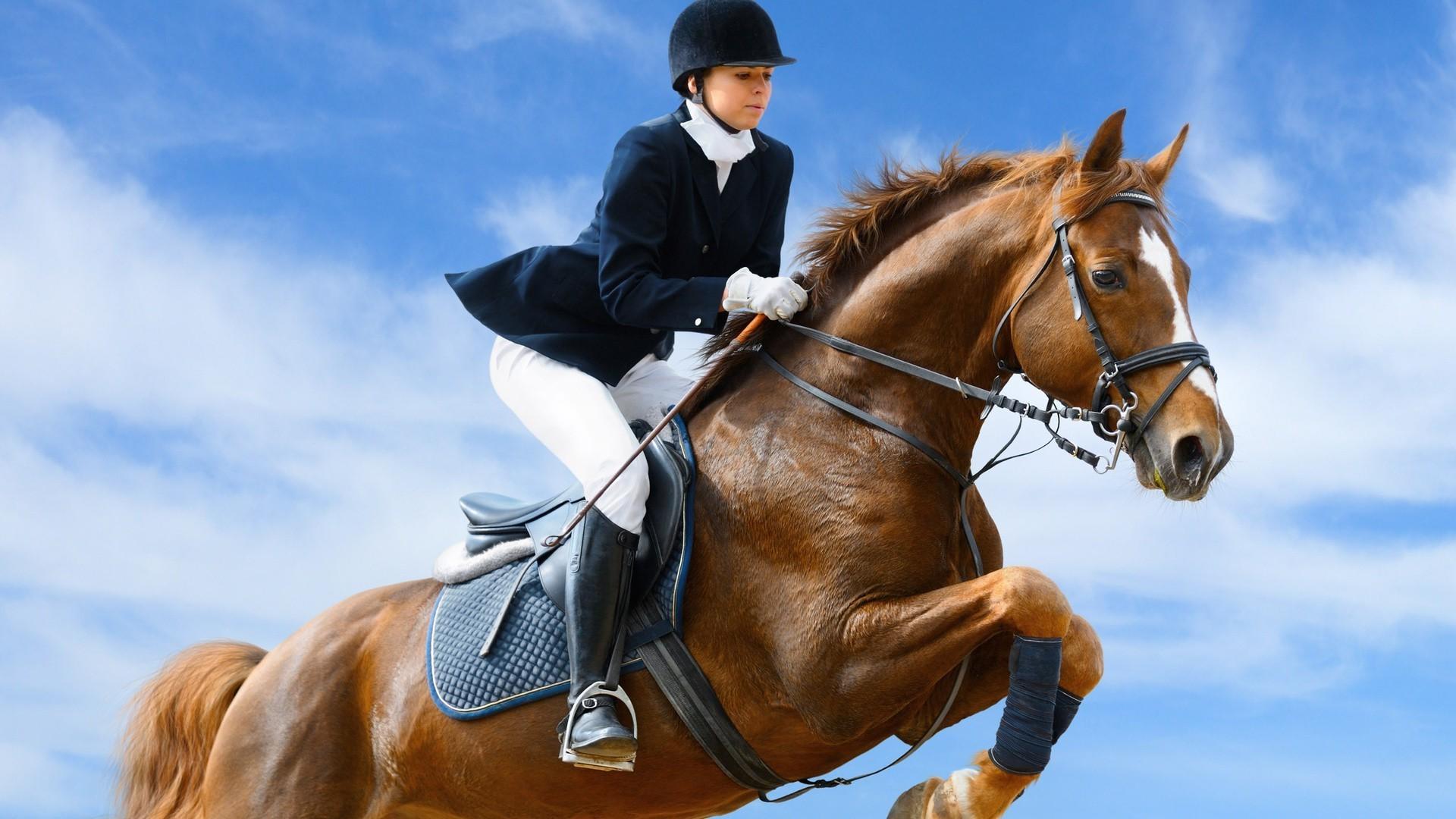 caballo men El caballo 7 leguas se excita al oler a la yegua de lejoscausando el morbo de todos los presentes , su dueño oscar luce su caballo con orgullo , pues el.