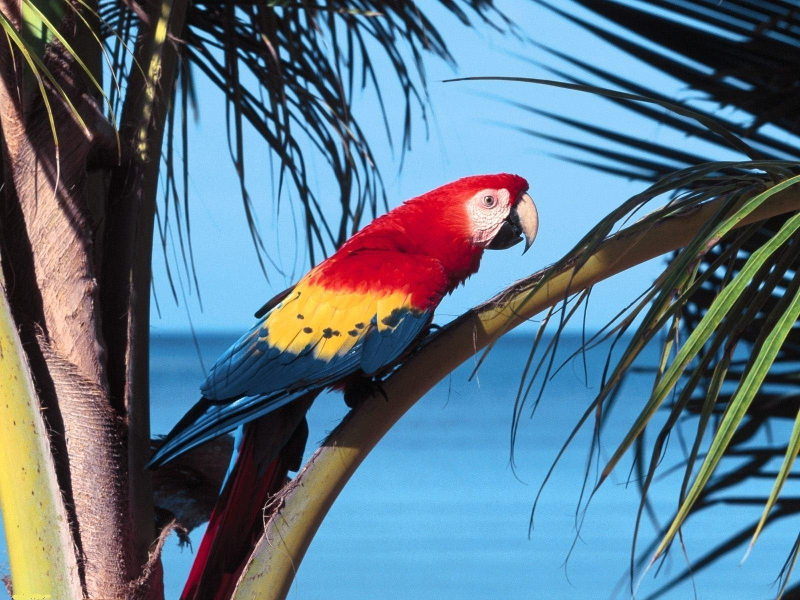 animals bird parrot tropical wildlife exotic macaw nature avian color feather tree beak wing parakeet wild outdoors