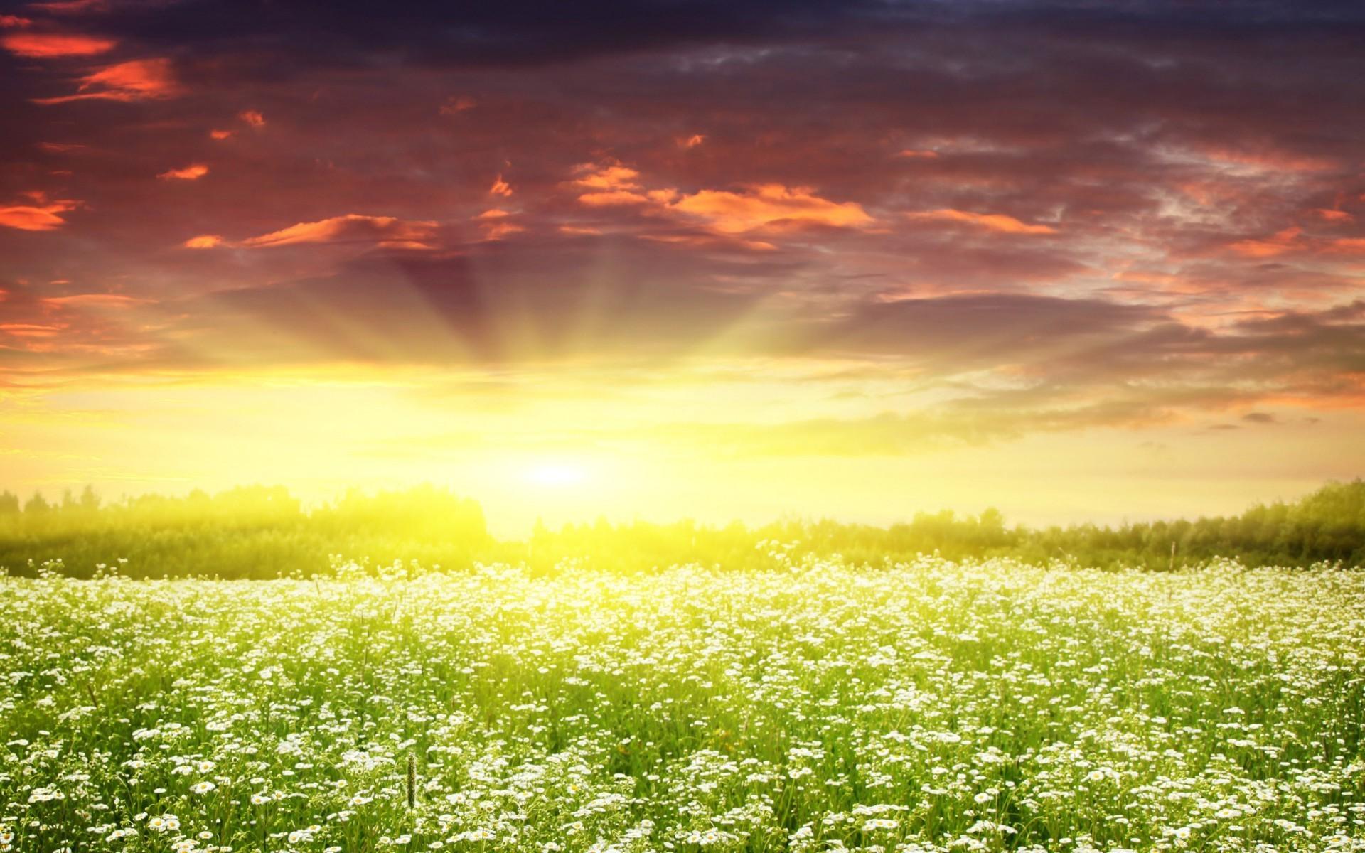 природа цветы трава мельниц восход солнце  № 2556667  скачать
