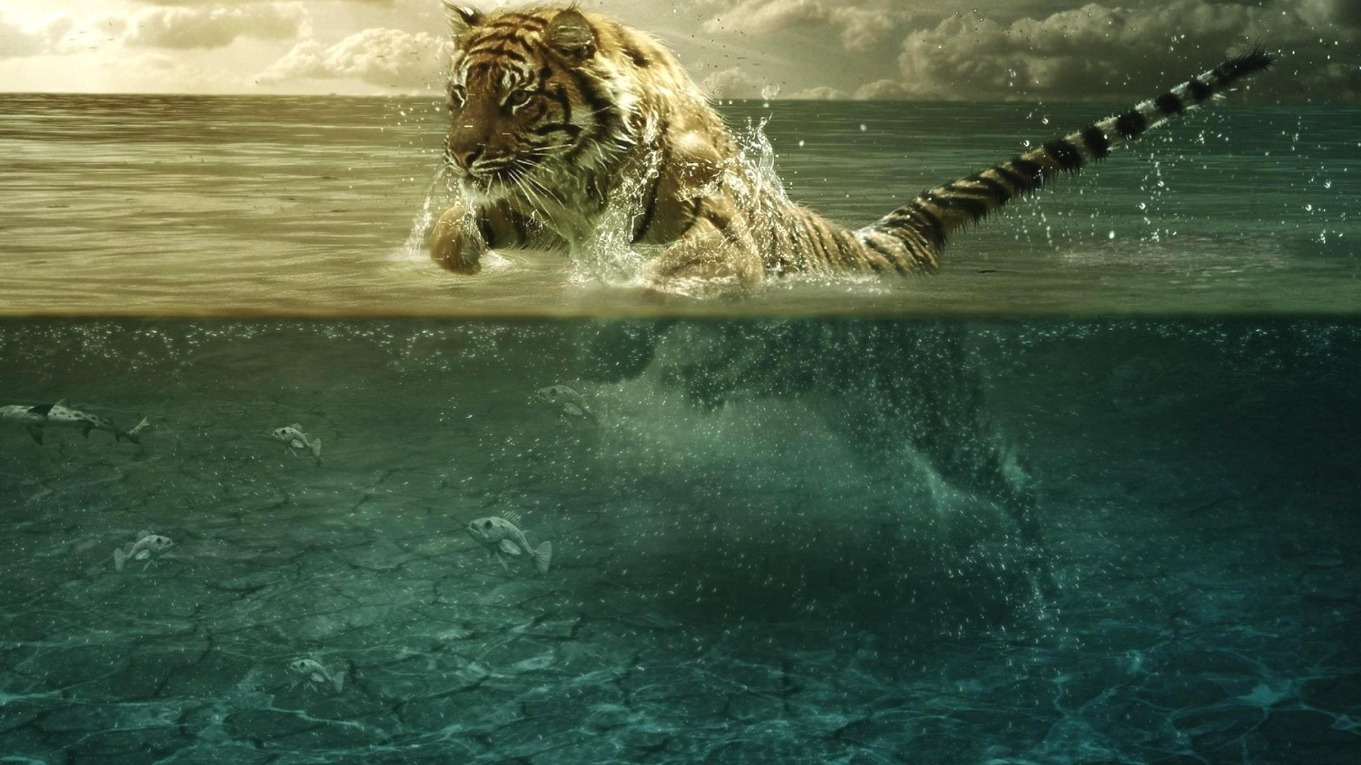 Tiger fishing