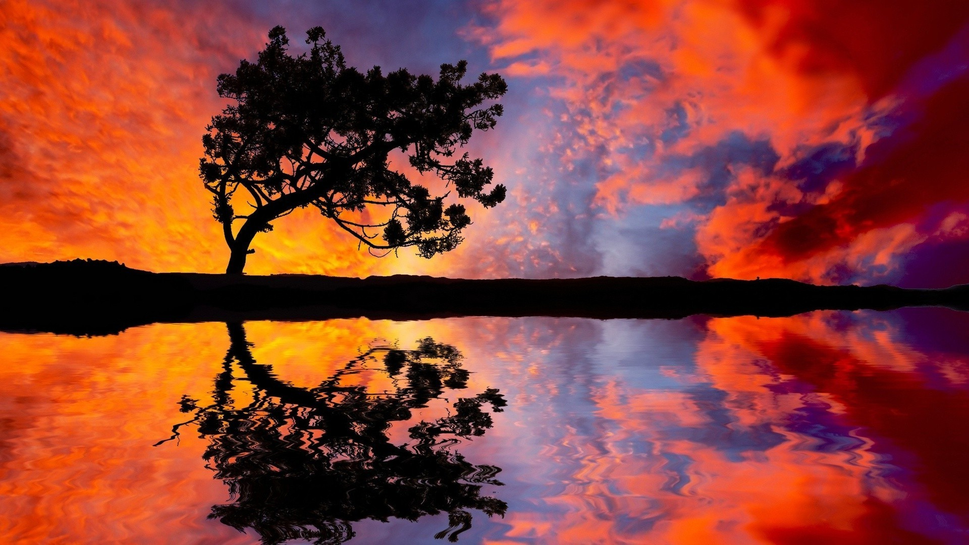 the sunset and sunrise sunset dawn landscape evening sun silhouette tree sky backlit nature scenic fair weather dusk fall outdoors wood weather light