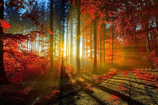 The sunset in the autumn forest
