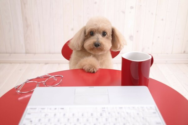 Lop-eared dog with a Cup of coffee on the laptop