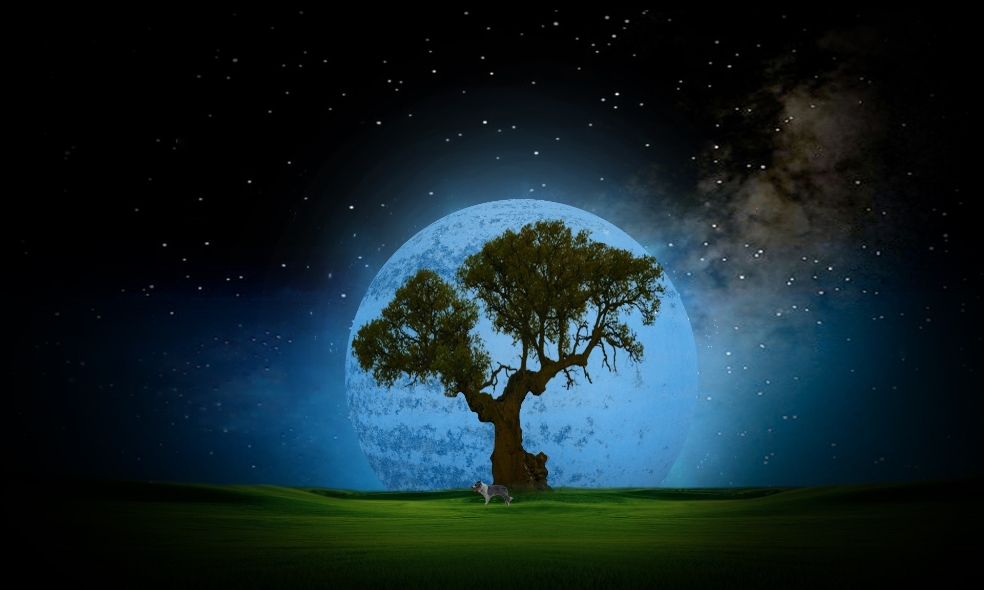 Moonlit night, spreading tree and a dog under it