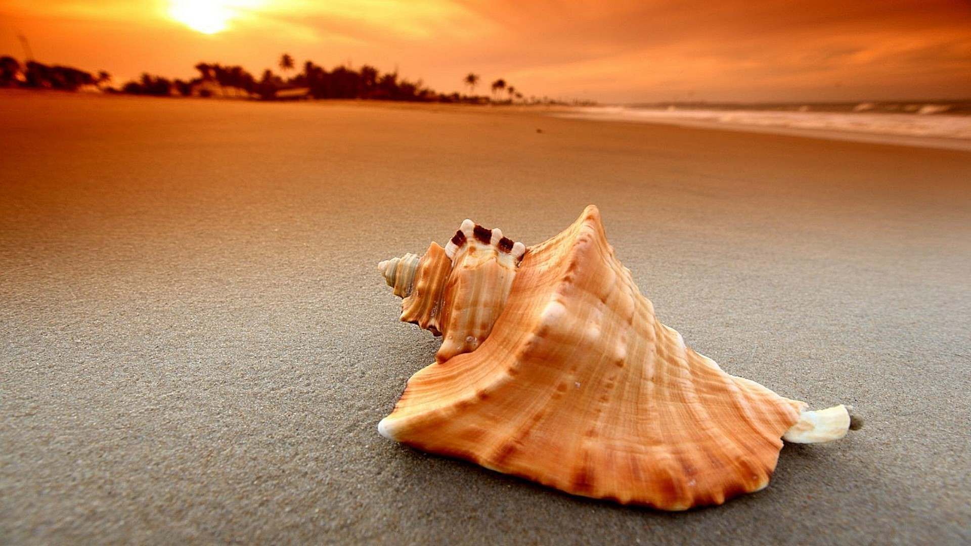 marine life beach sand seashore sea seashell ocean summer water shell sun travel nature vacation tropical shore sunset starfish seaside fair weather