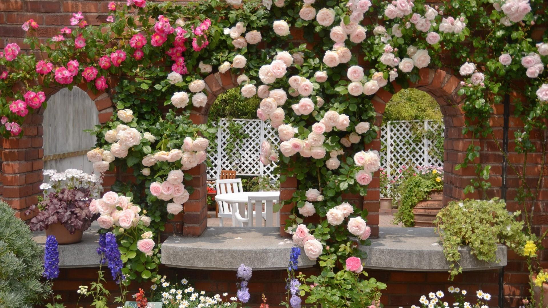 Розы куст забор  № 3015296 без смс
