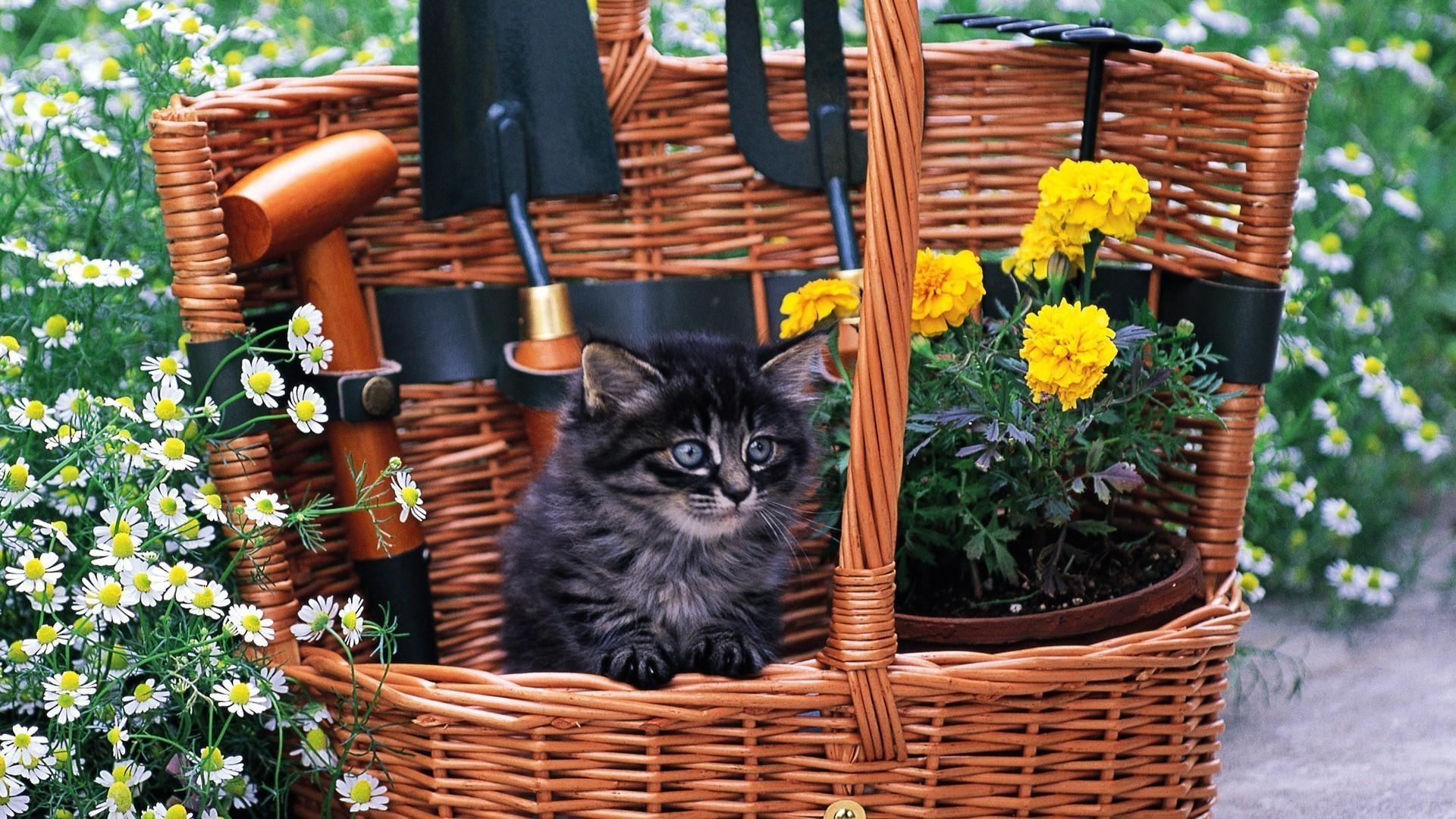Кота в корзинке1 загрузить