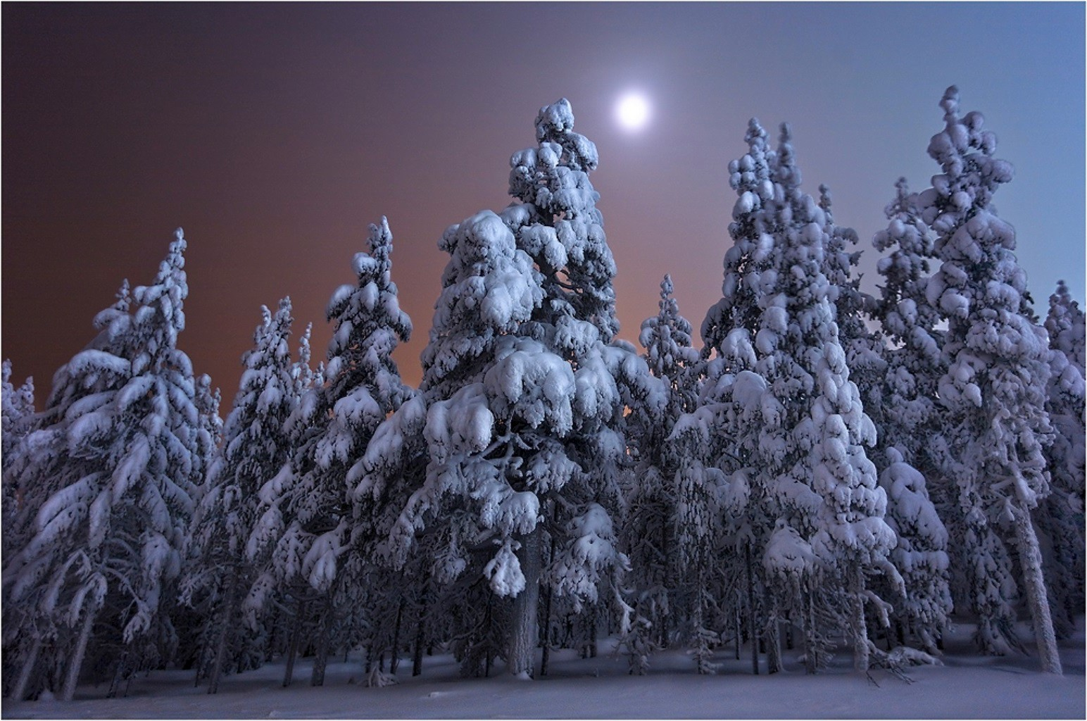 winter snow frost cold tree frozen christmas season wood pine weather fir landscape ice evergreen frosty branch