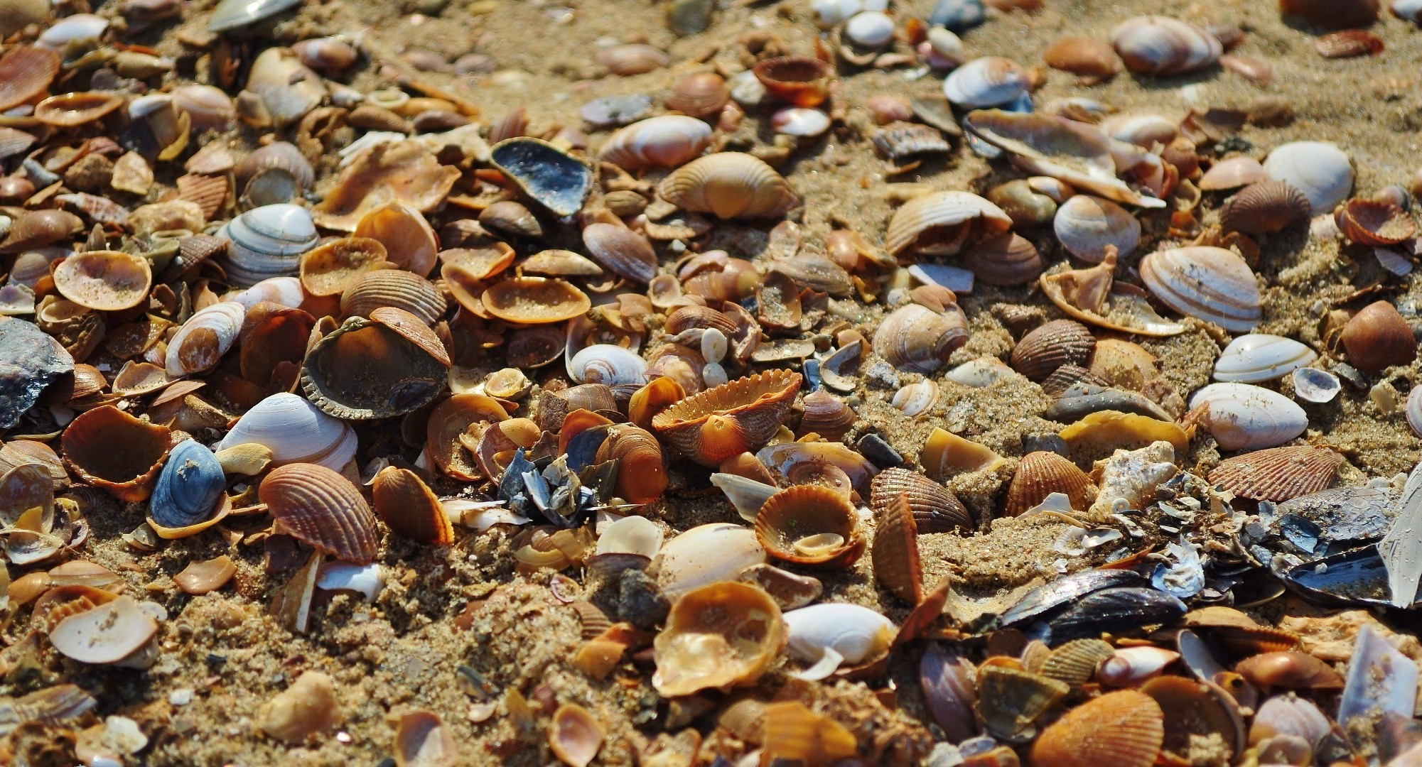 Sea shell is a symbol of the sea...