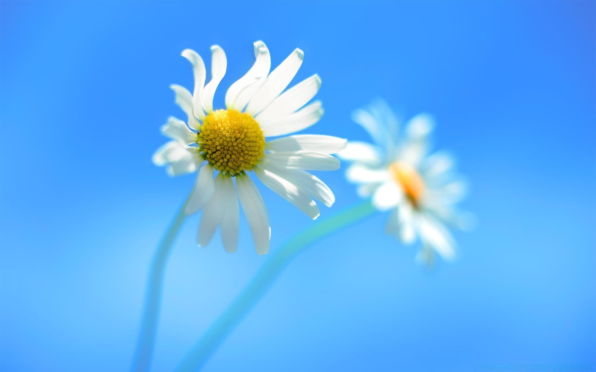 windows nature flower summer flora chamomile color bright blur close-up growth freshness petal garden leaf fair weather