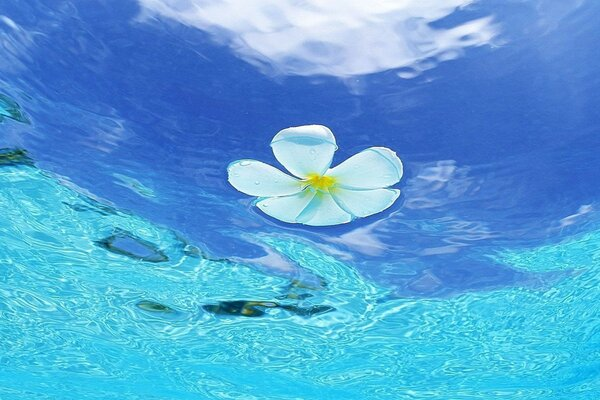 Flower in the water