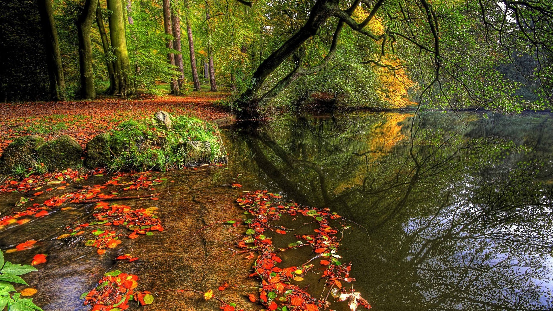 Pond In Autumn In The Woods Phone Wallpapers