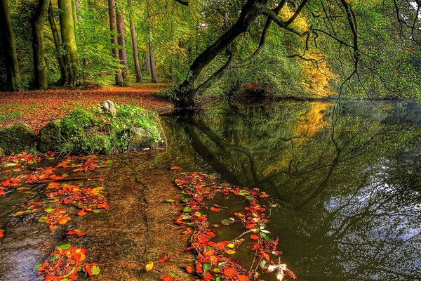 pond in autumn in the woods