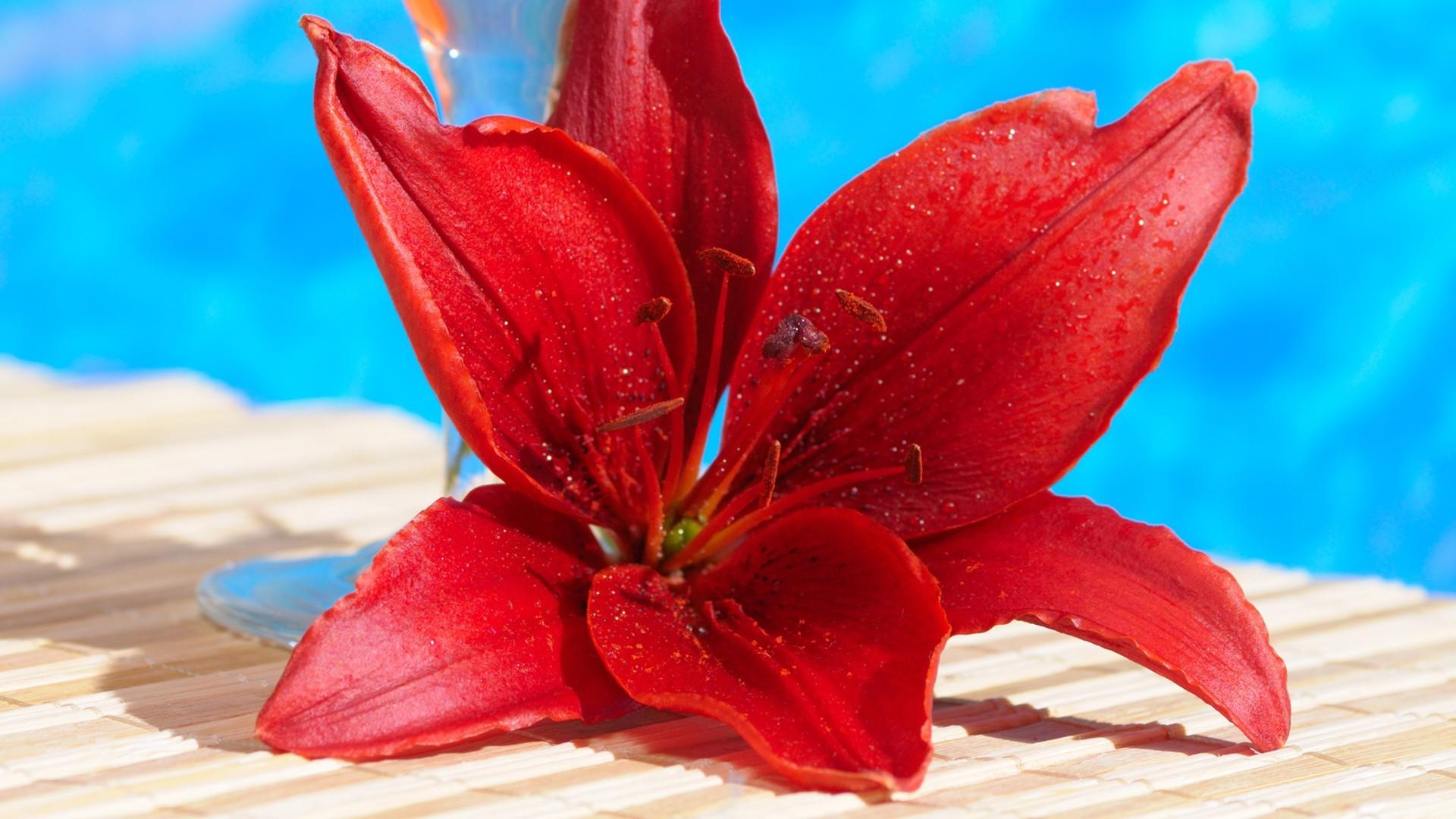 Обои на рабочий стол 1920х1080 цветы лилии