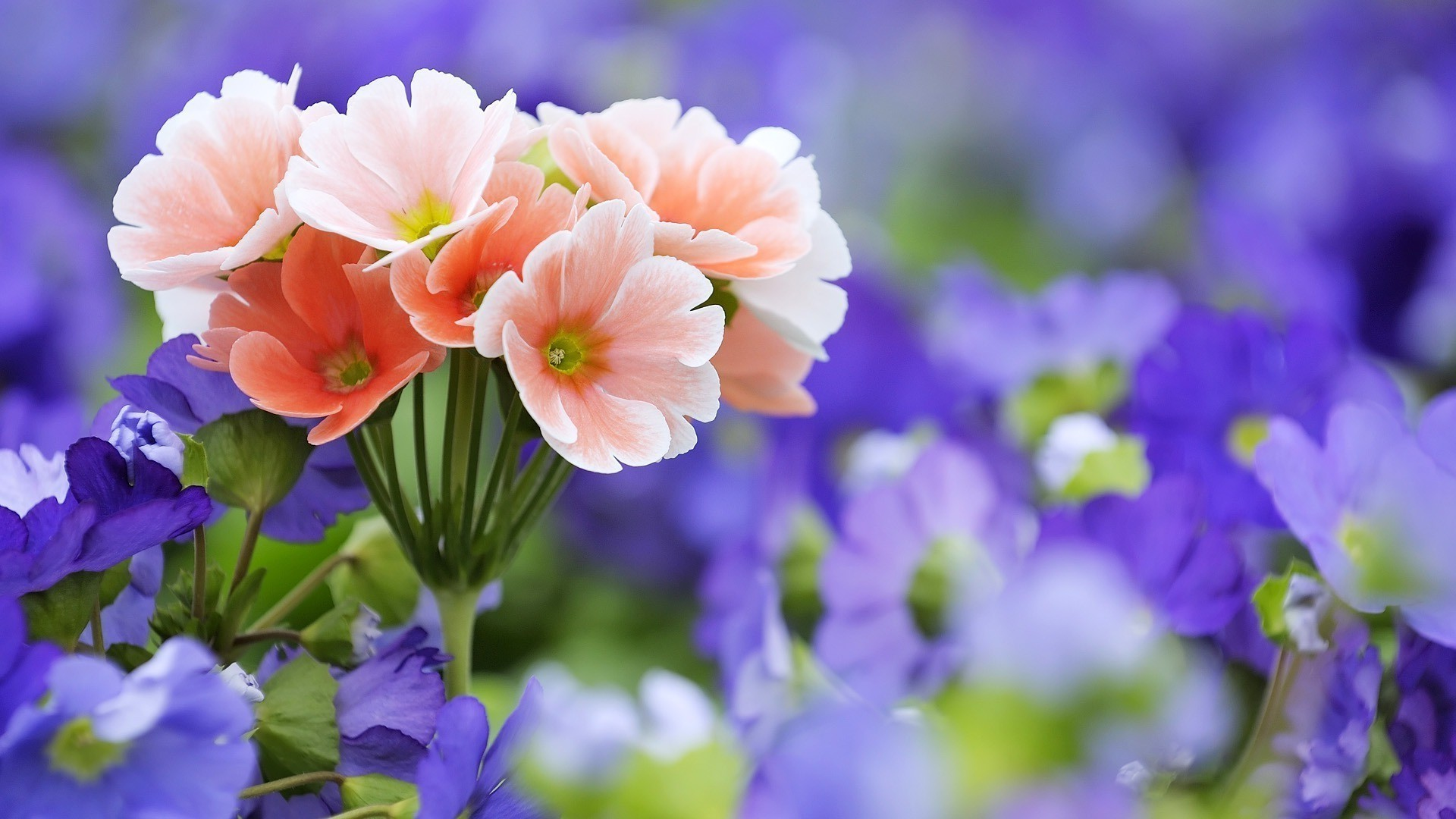 Pink Purple Flowers Android Wallpapers For Free