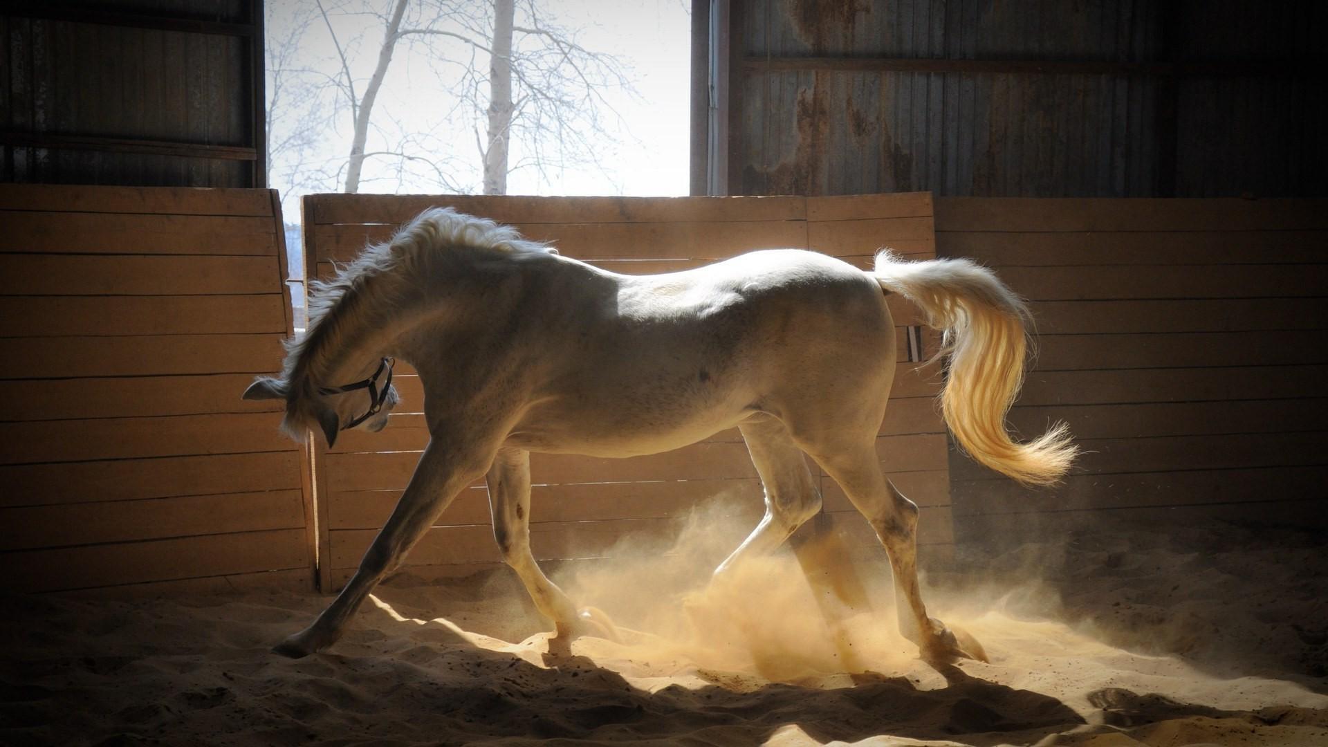 год лошади обои для рабочего стола № 528490 без смс