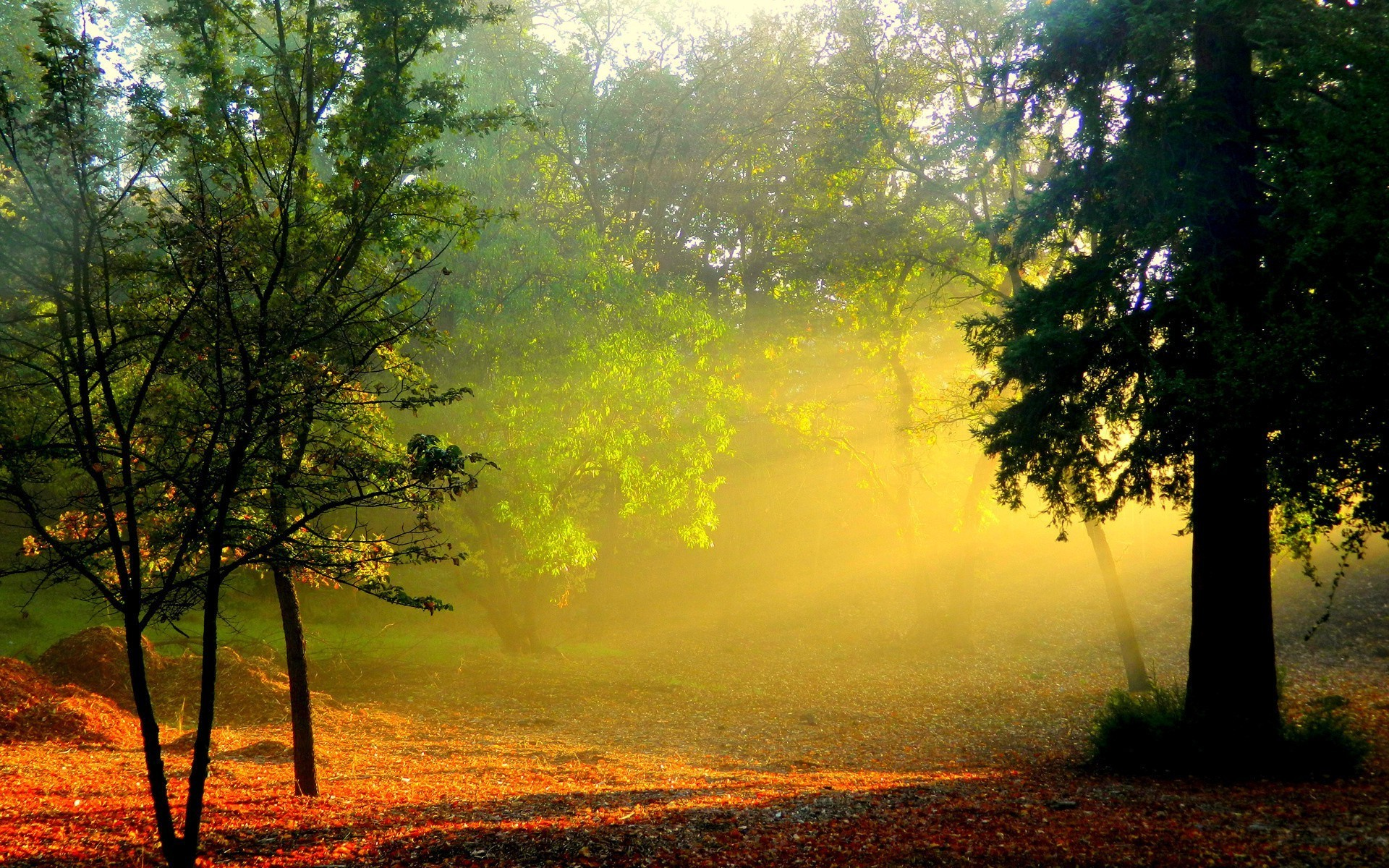 autumn dawn tree landscape mist wood fog nature sun leaf fall fair weather sunset backlit park countryside outdoors sunbeam summer light