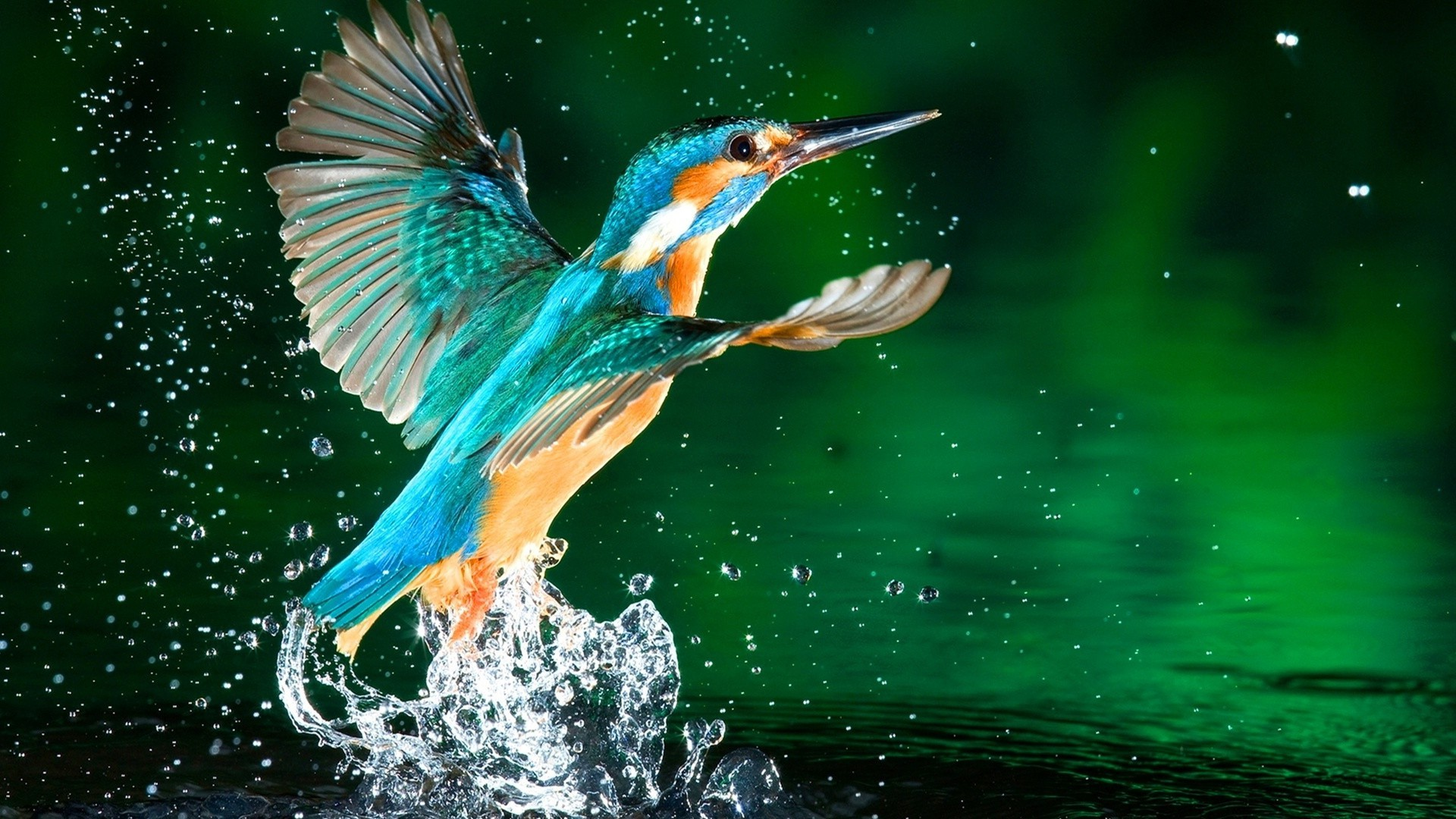 animals bird wildlife water nature animal fish fly beak lake