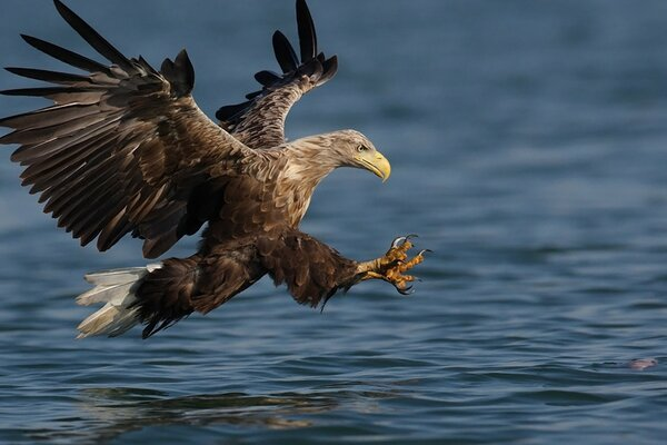 eagle at the waters edge