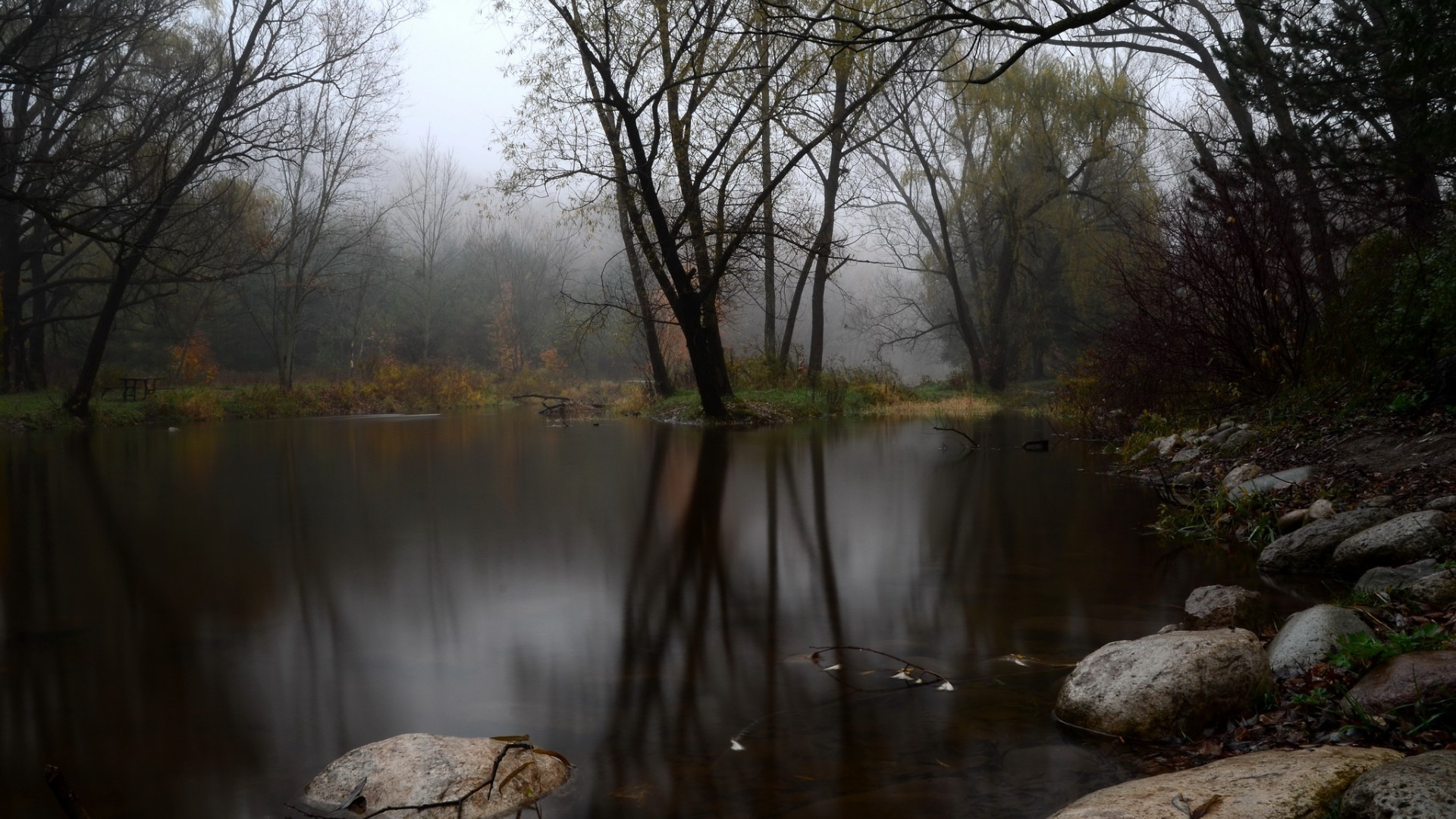 Fog,trees,lake