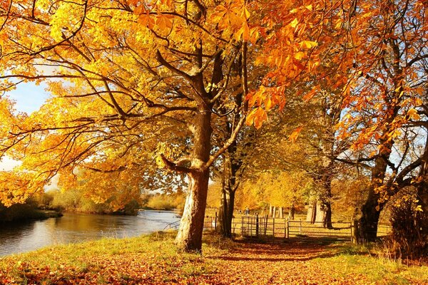 Autumn,river,trees