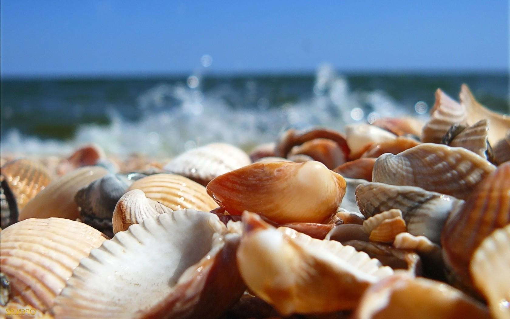 Seashells, the sea