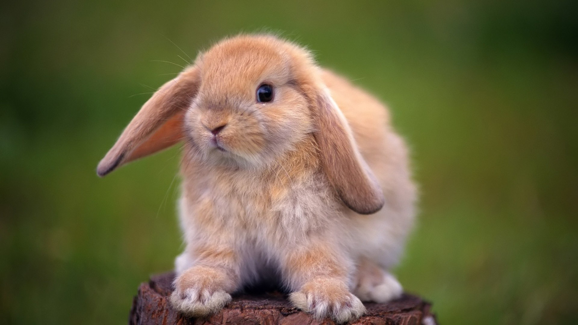 rabbit on a stump