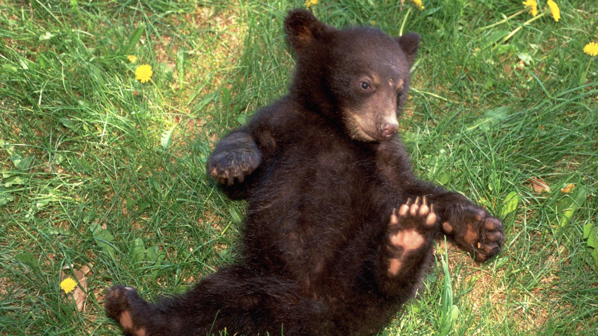 Медвежата смотреть