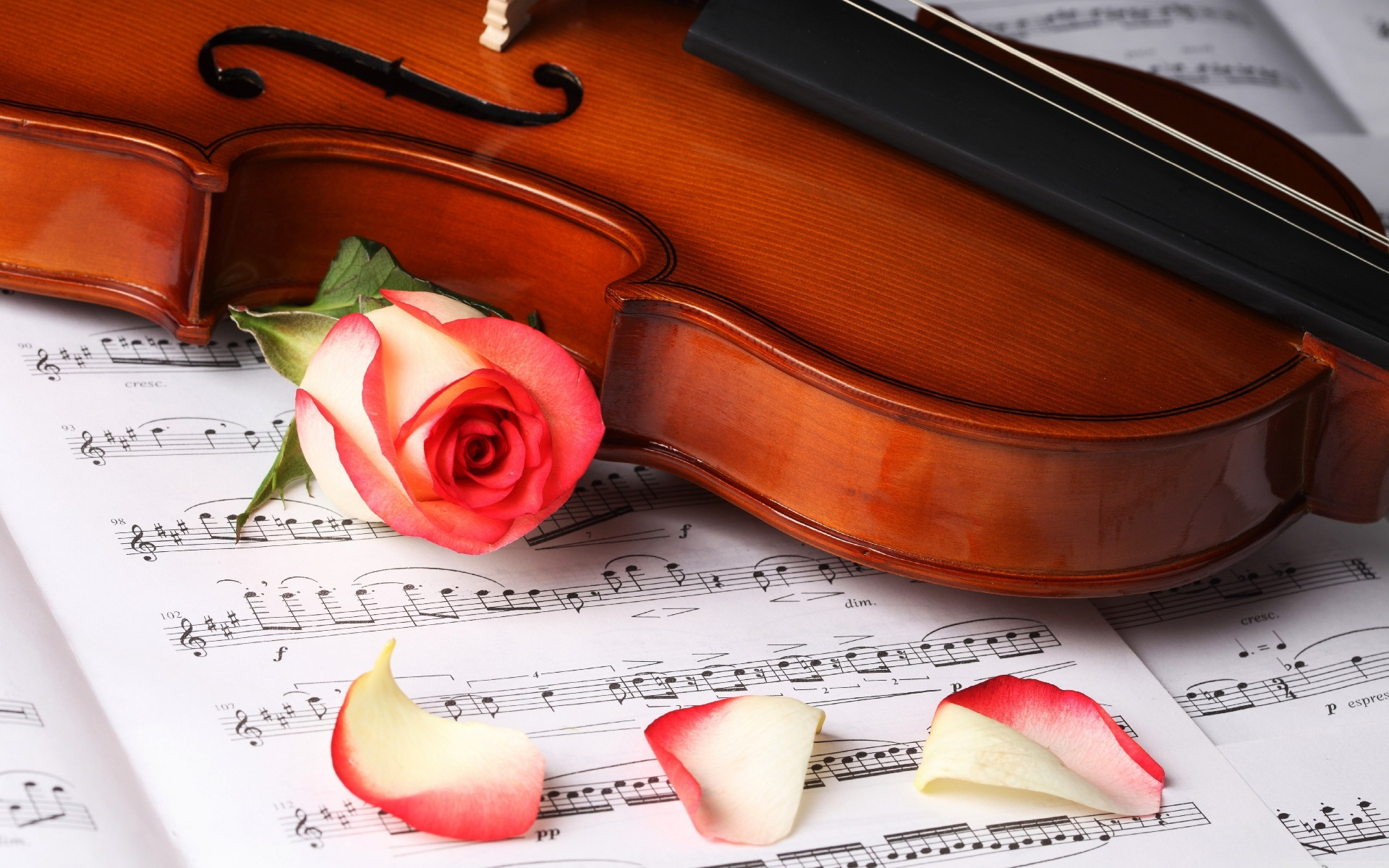 Violin on sheet music and red rose