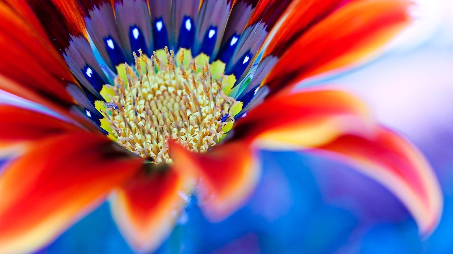 природа цветы синие красные желтый nature flowers blue red yellow в хорошем качестве