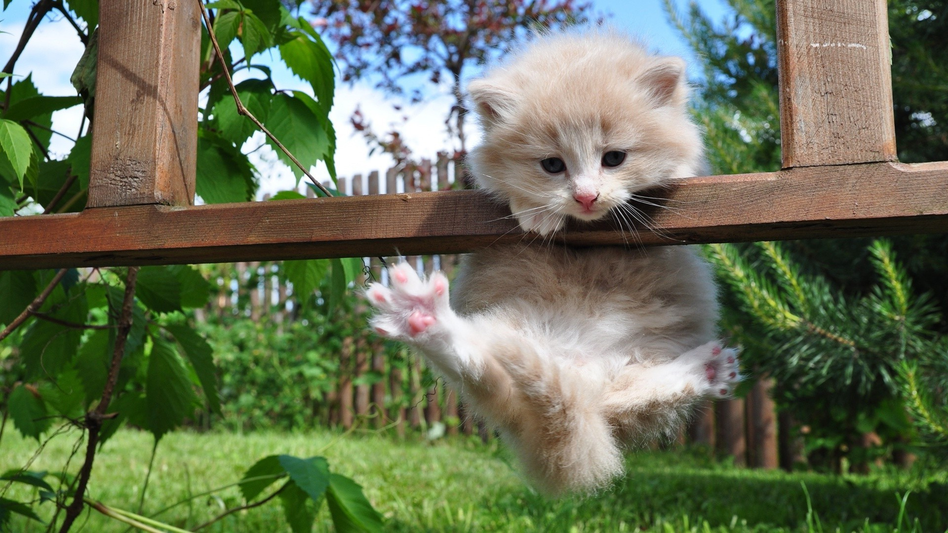 Kitten trying not to fall)))