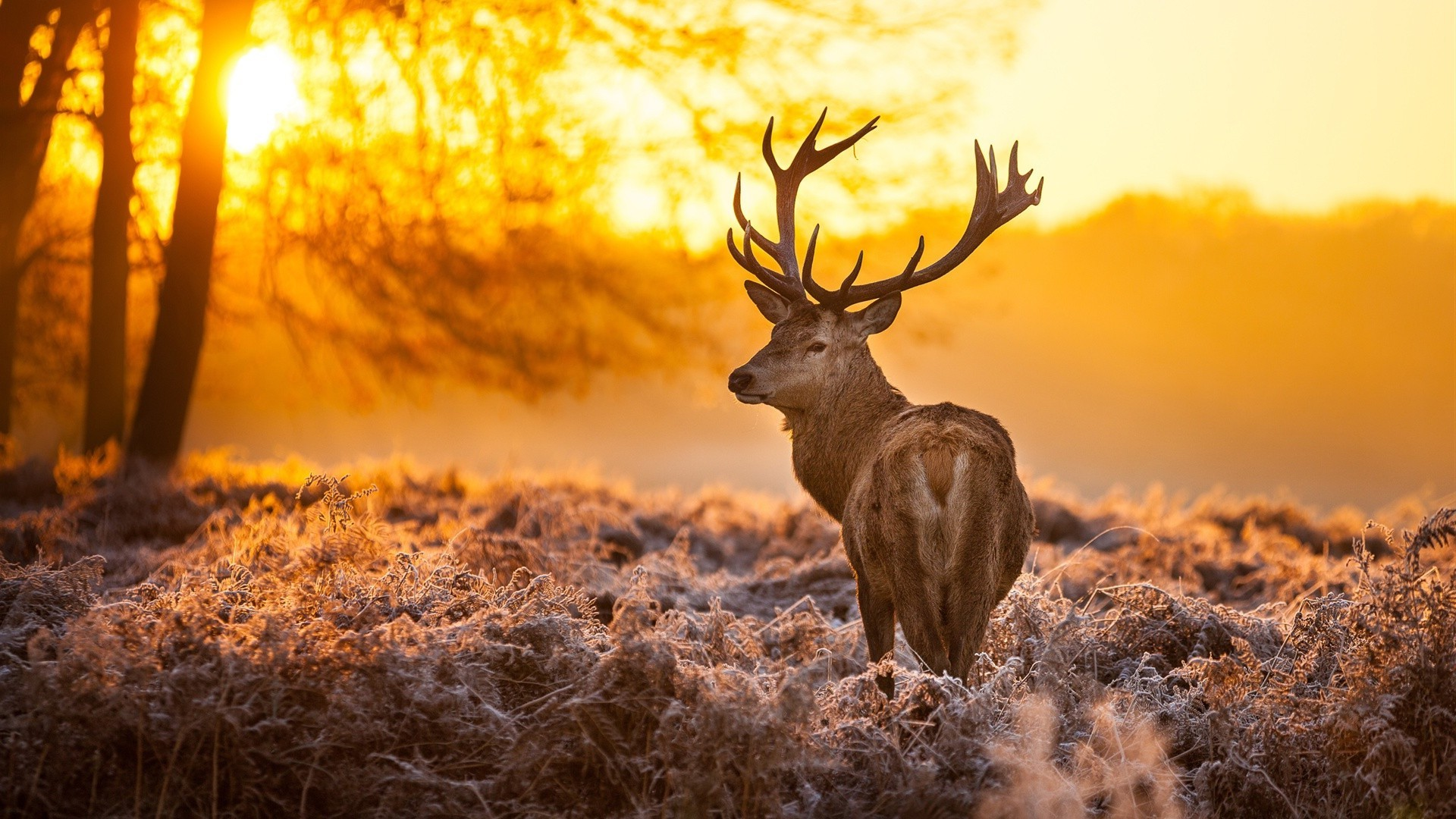 Deer in winter forest at dawn - Android wallpapers