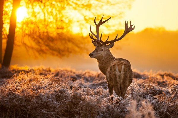 deer in winter forest at dawn