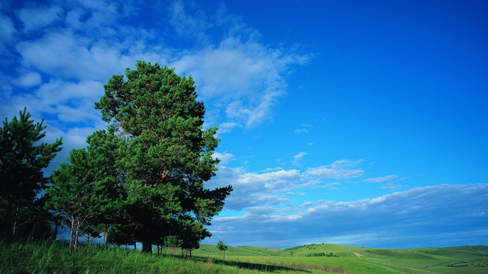 Green tree on background of blue sky
