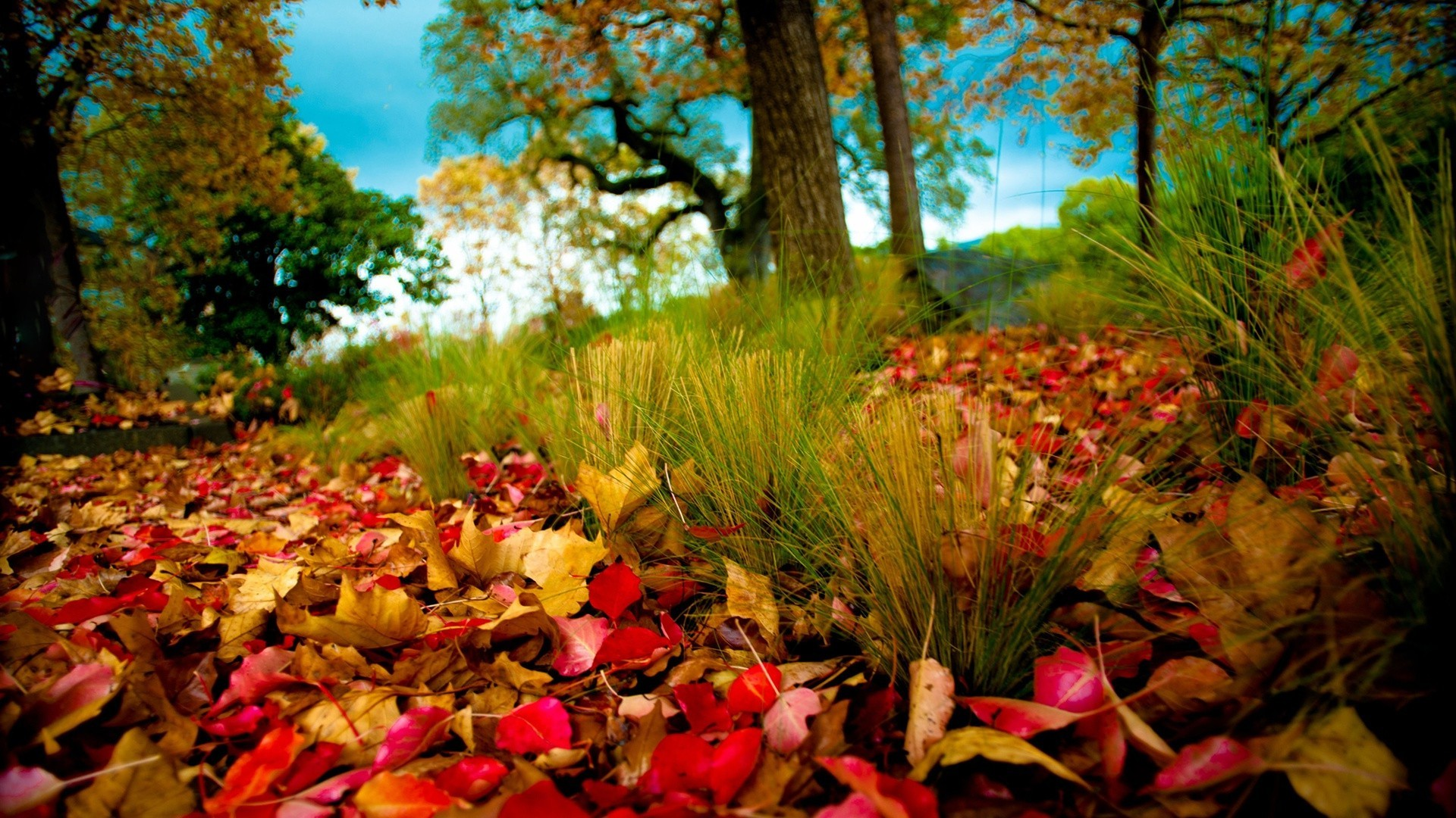 leaves fall leaf tree nature park maple outdoors wood season landscape color garden flora flower